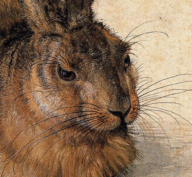 アルブレヒト・デューラーの画像 p1_36
