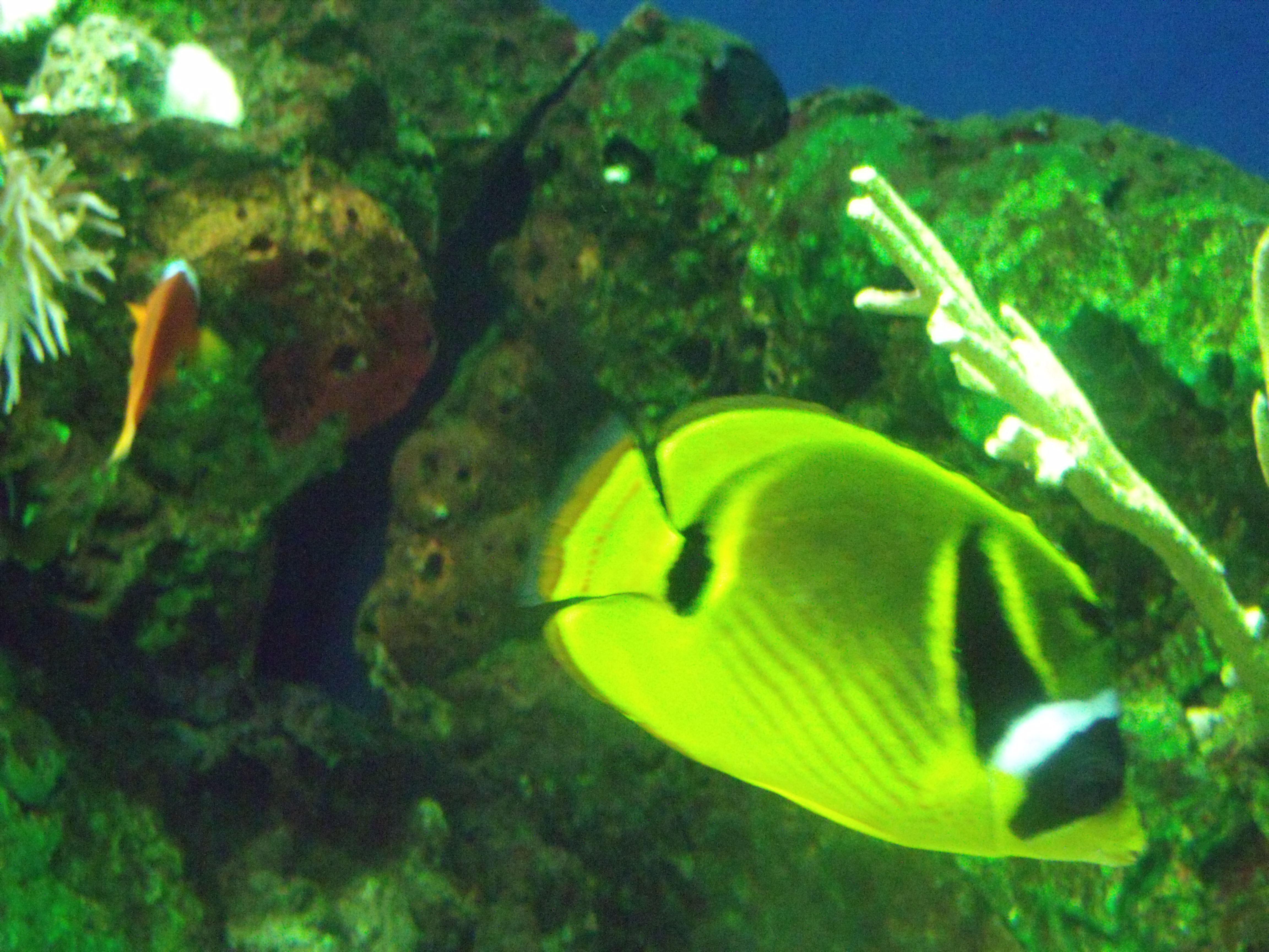 new orleans aquarium memorial day