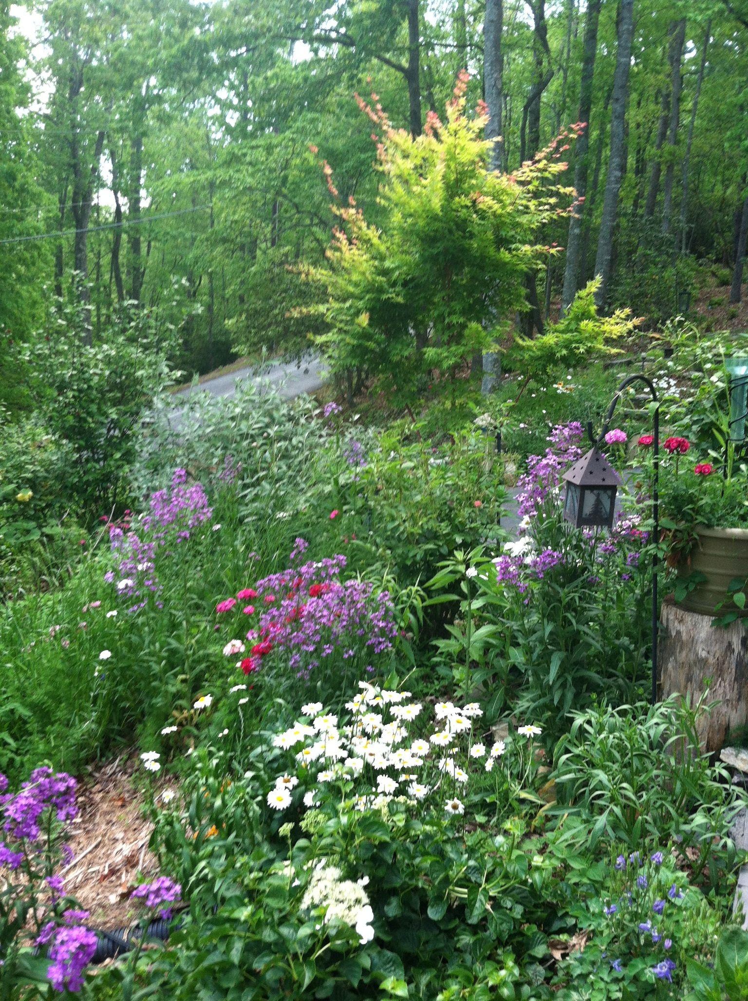 Woodland garden made in the shade gardens pinterest for Woodland garden designs