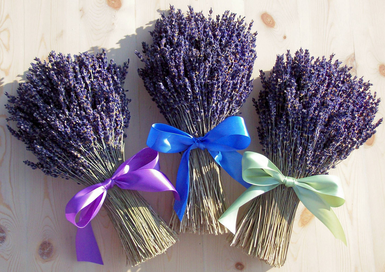French Lavender | Lifestyle | Pinterest