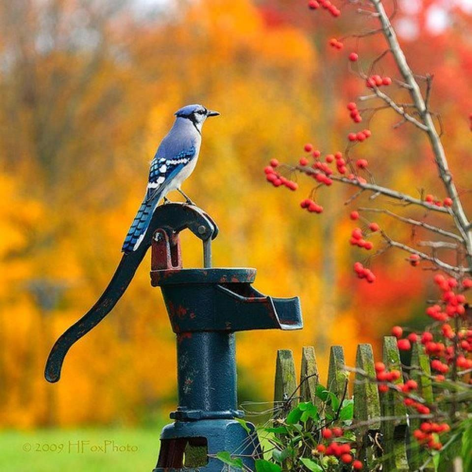 Good Morning Beautiful Birds Images : Good morning birds are beautiful pinterest