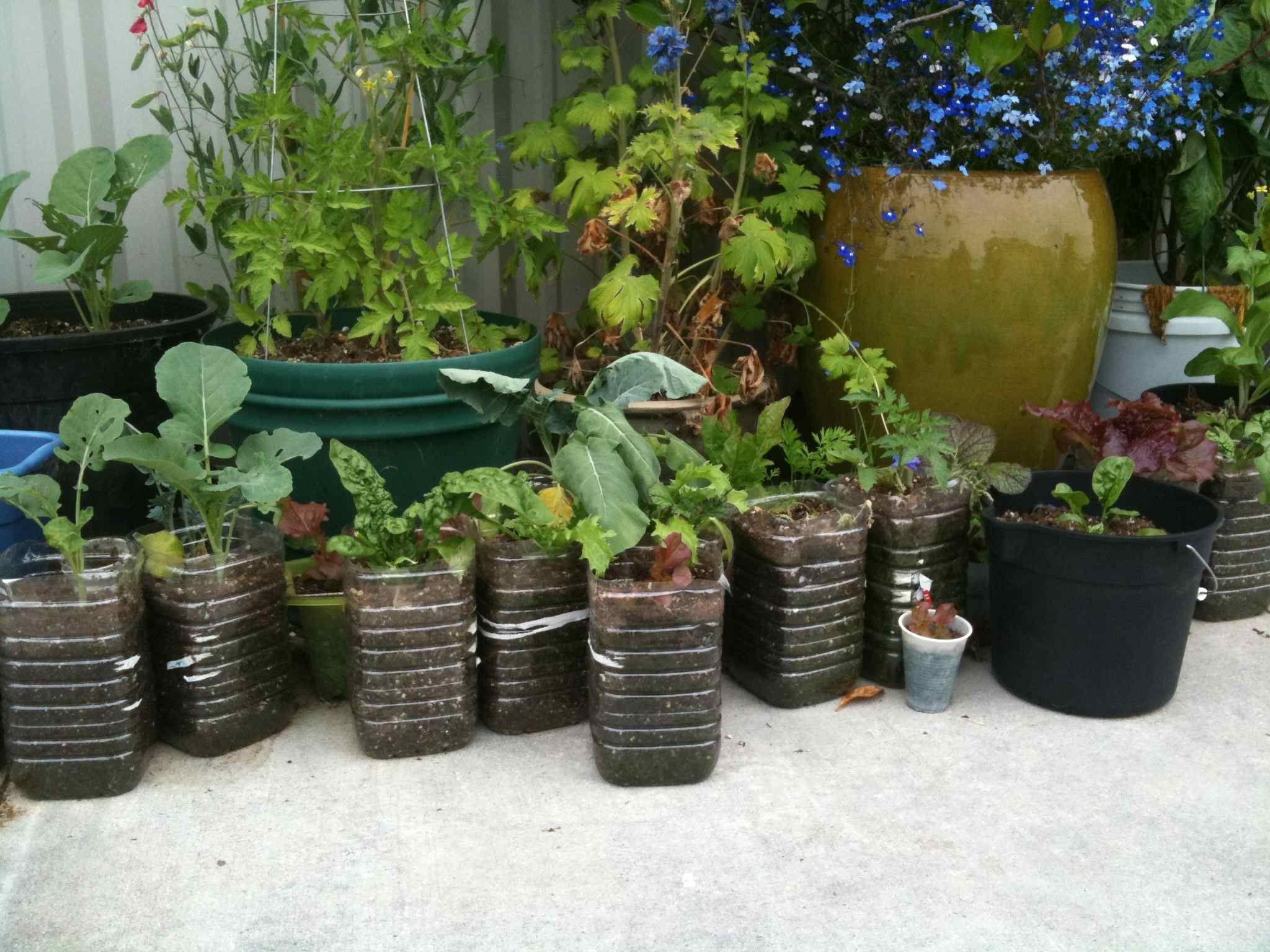 container gardening garden projects pinterest