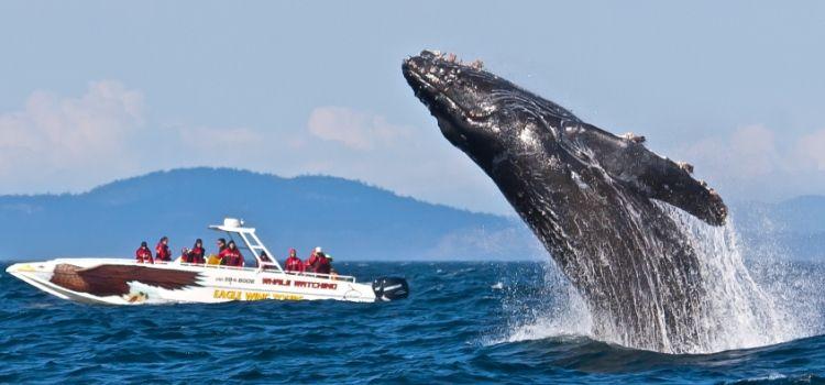 Avistaje de ballenas en Victoria Isla de Vancouver