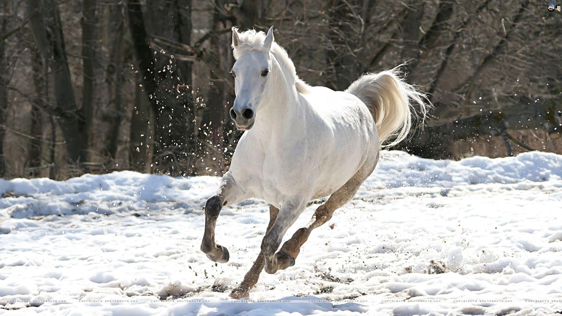 Обои лошадей для рабочего стола зима