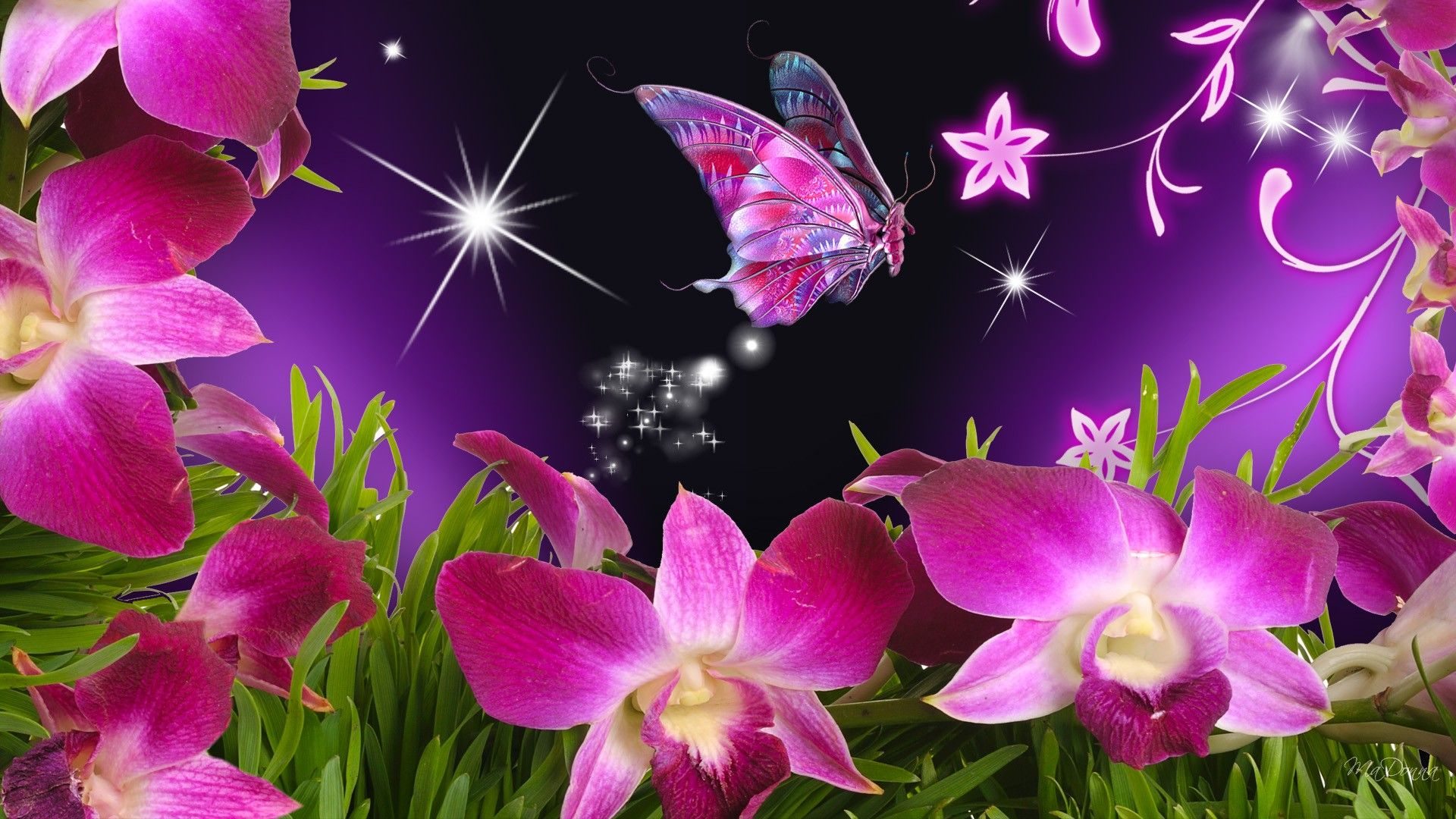 Beautiful Pink Orchids & Butterfly