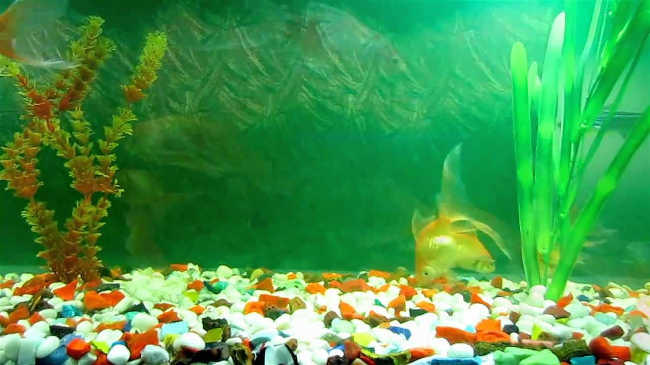 Moving fish tank background free download