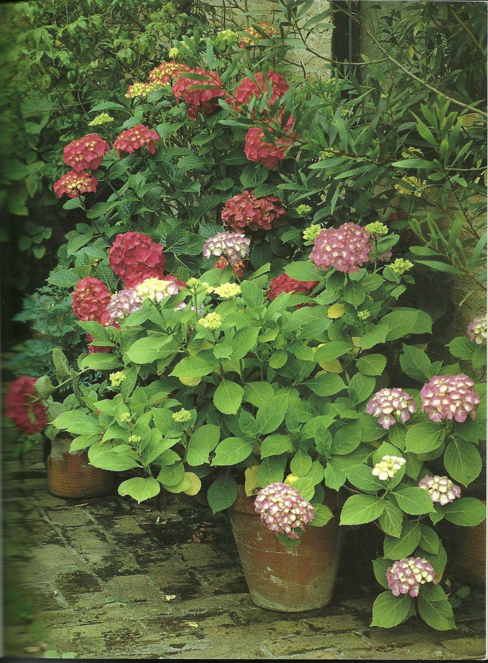 wow!!!!!   Container gardening   Pinterest