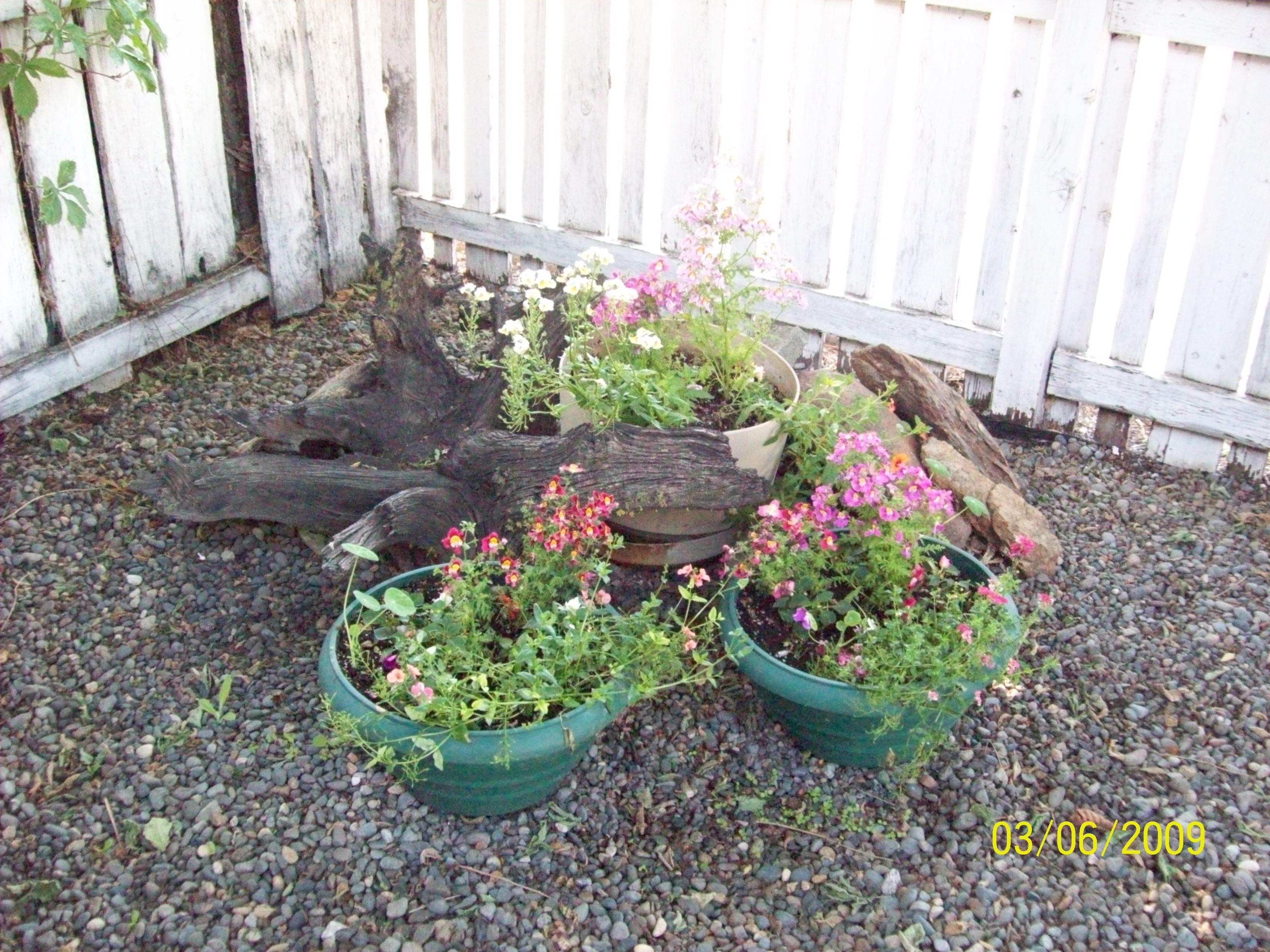 containers vintage garden ideas pinterest