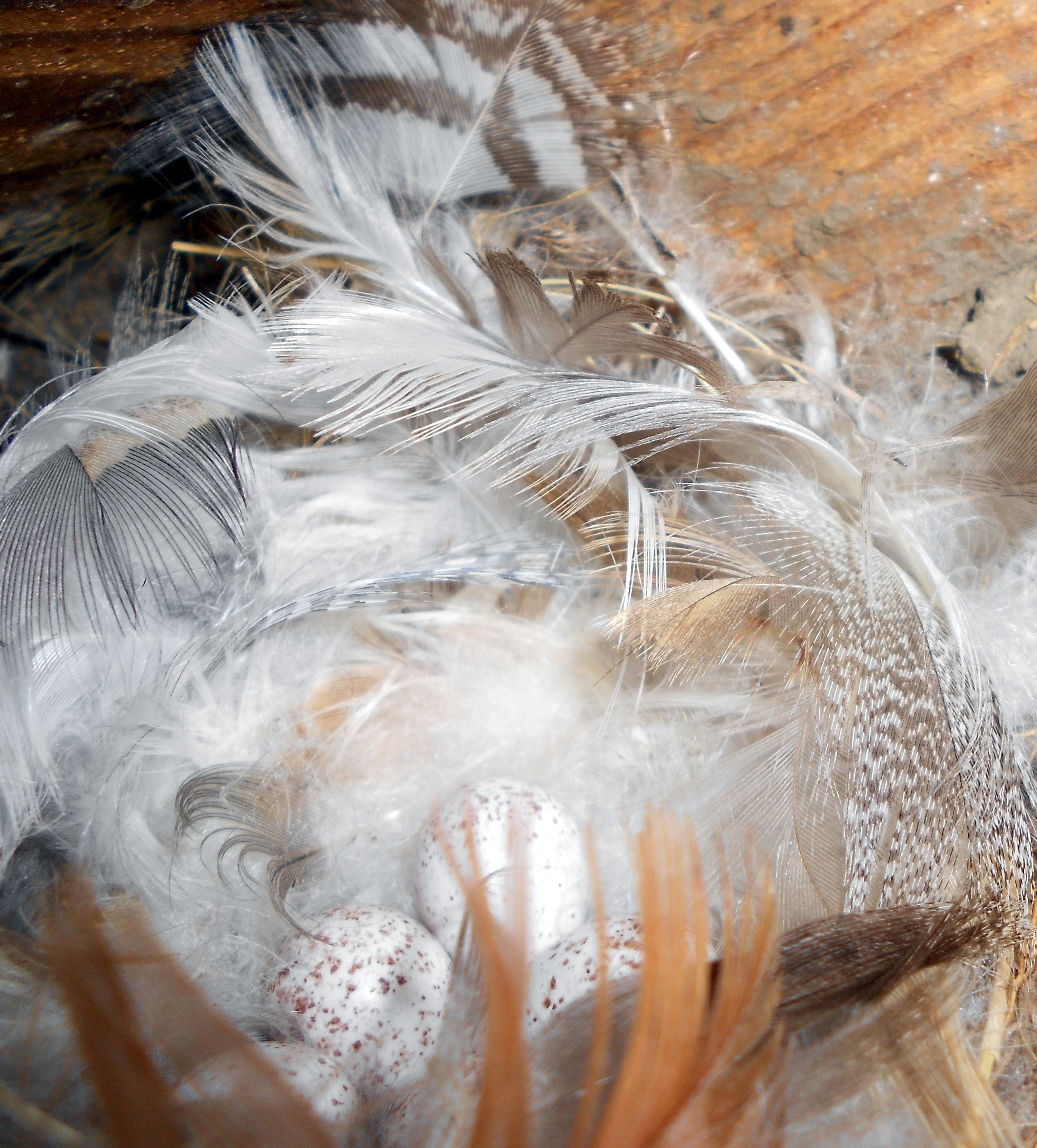 Pin by Heather Woods on Feathers and Nests | Pinterest