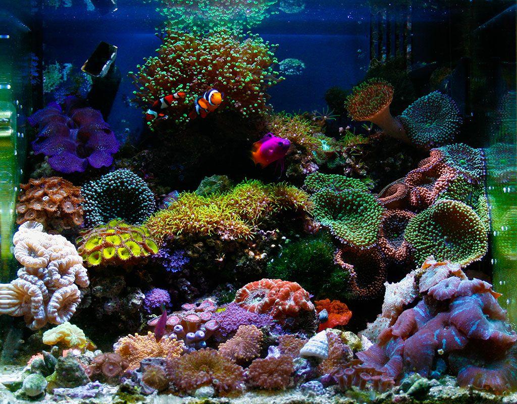 Salt water aquarium Reef Tank Pinterest