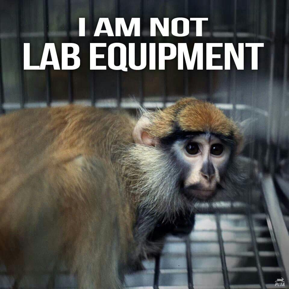 Animal Testing Is Bad Essay