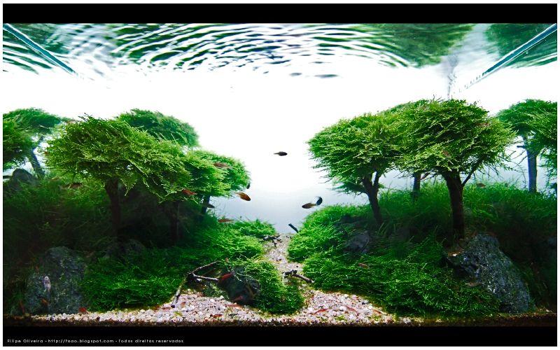 Aquarium master piece by Takashi Amano Planted Aquariums Pinterest