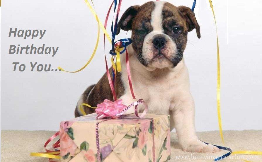 Happy Birthday Dog Quotes ~ Happy birthday boxer dogs