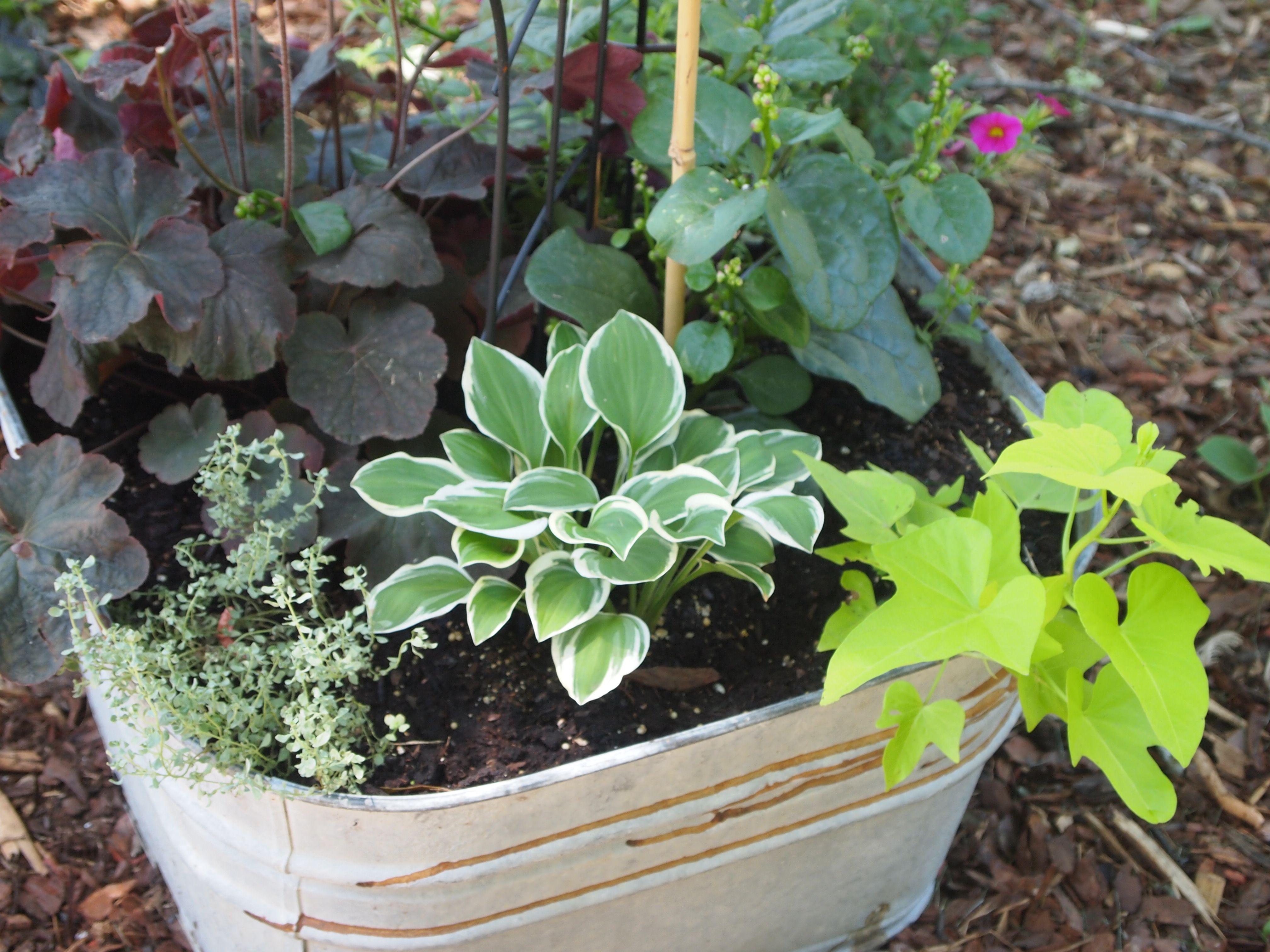 Wash tub planter things i love pinterest for Old wash tub planters