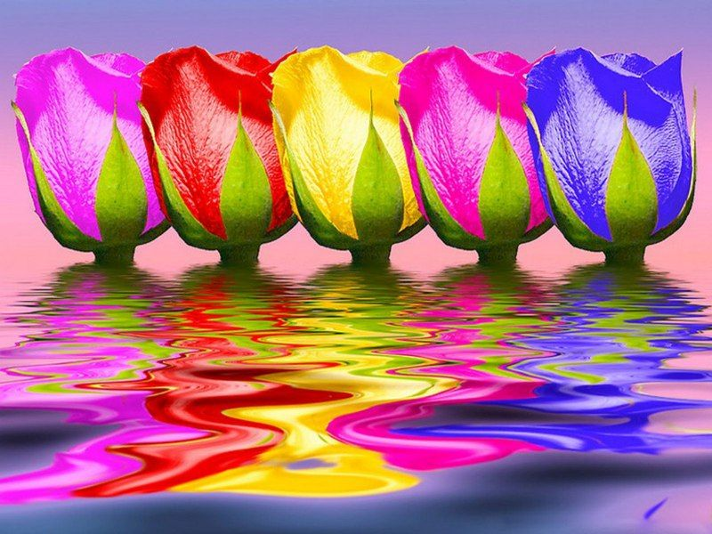 Tulips rainbow color rainbow pinterest for Pics of colourful roses