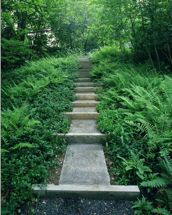 Landscaping With Ferns : Ferns around the path landscape ideas