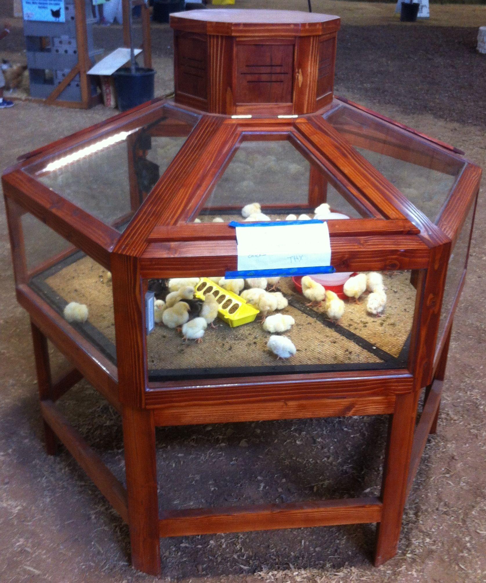 baby chick hatchery chicken coop ideas pinterest