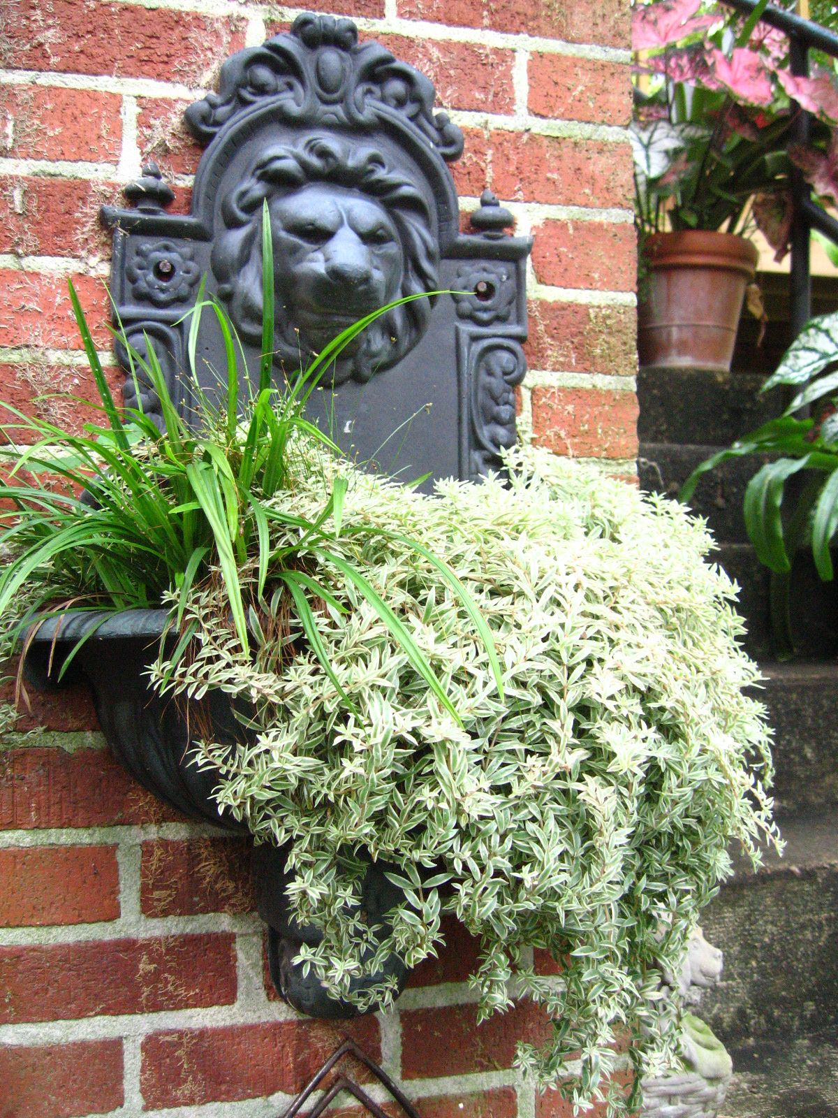 Pin by Rebecca King on Gardening-Containers | Pinterest