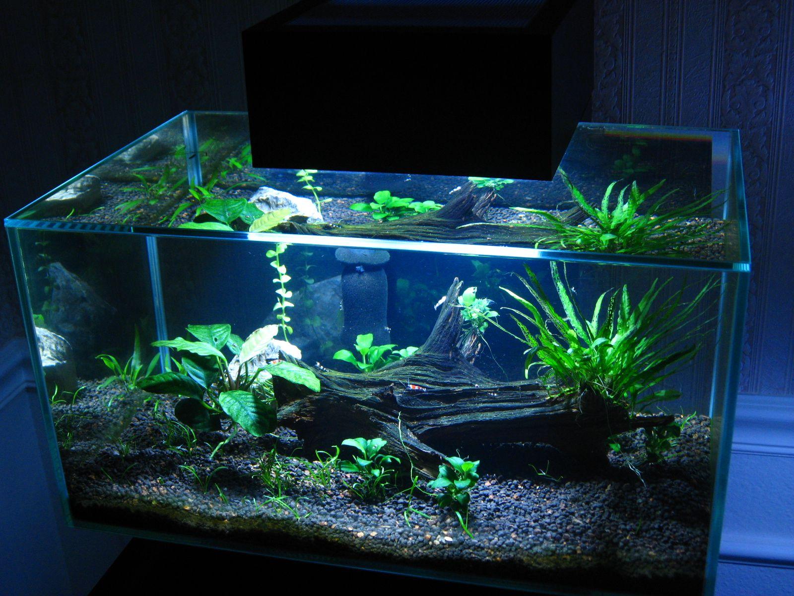 Share for Fluval edge fish tank