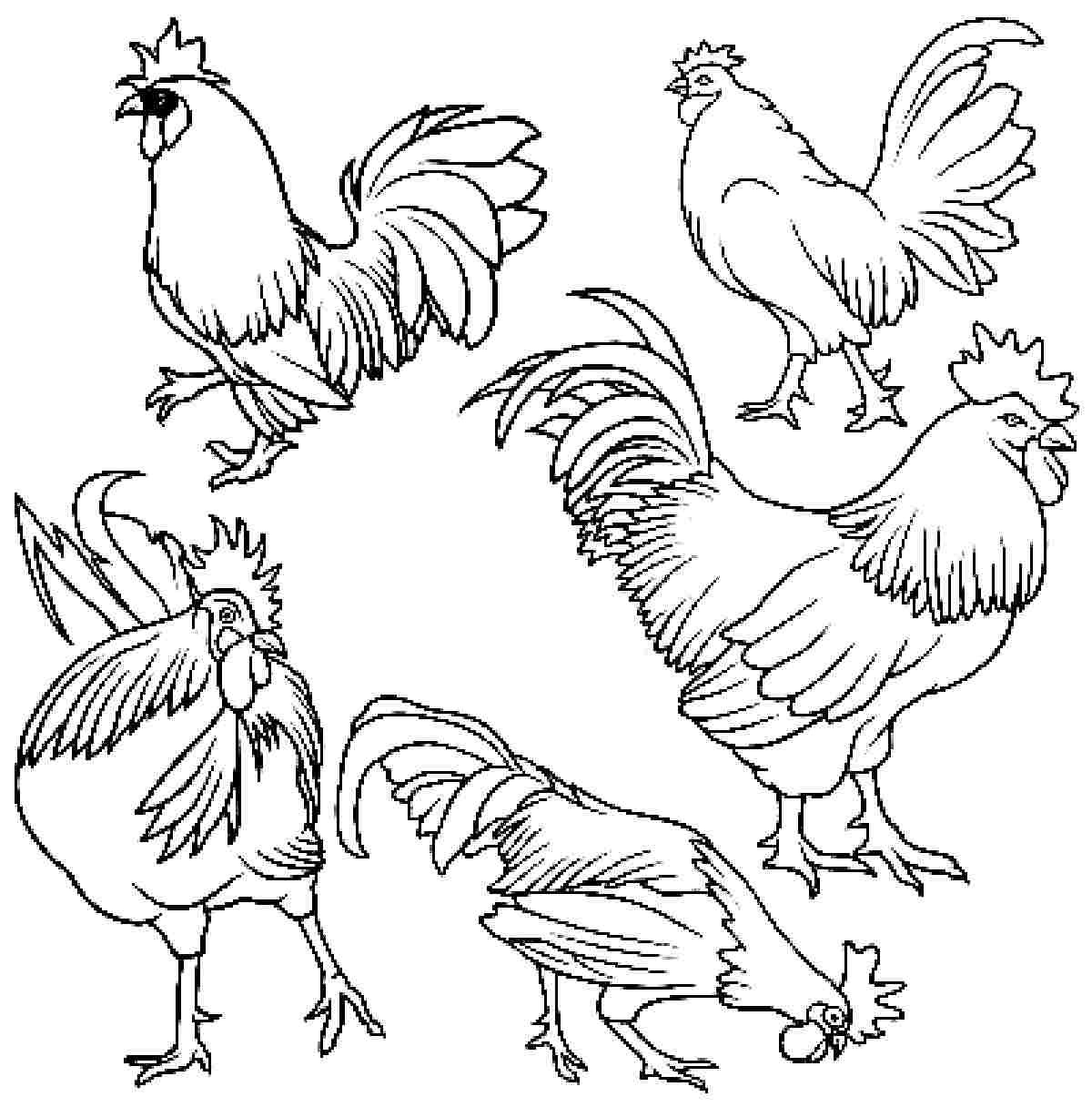 Realistic chicken coloring pages