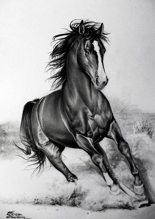 Realistic horse running drawings