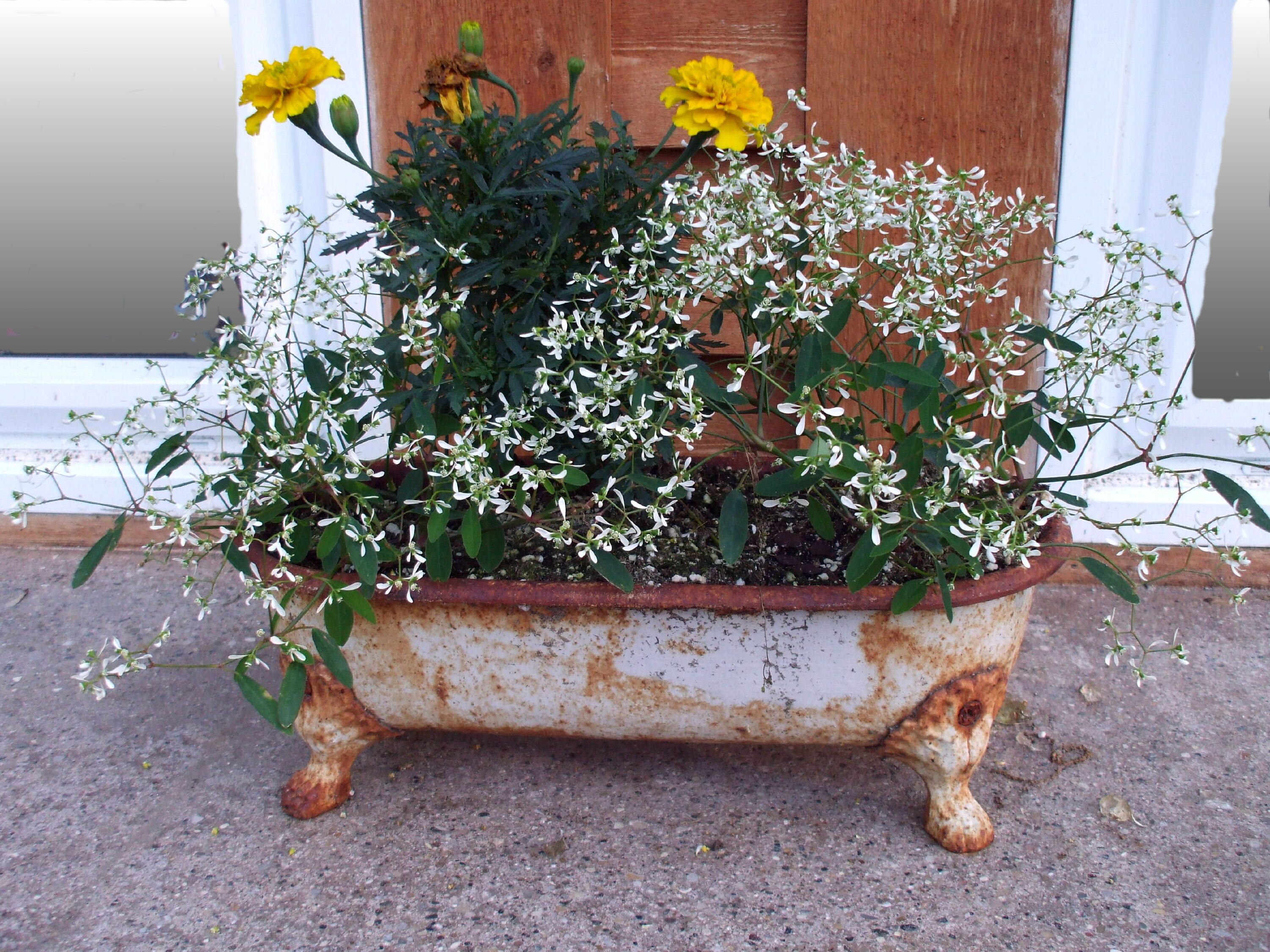 small wash tub. Plant Containers Pinterest