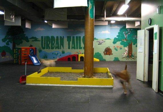 Dog Play Room Animal Friendly Eco House Design Pinterest