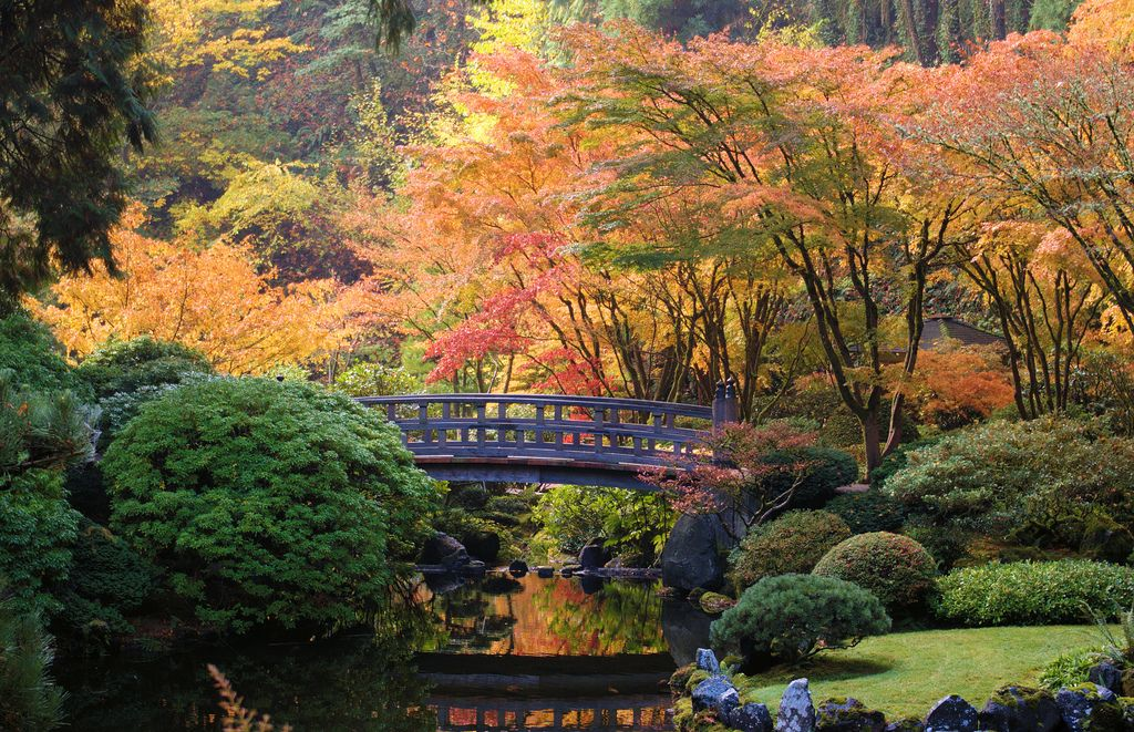 japanese garden mother nature 39 s coloring book pinterest