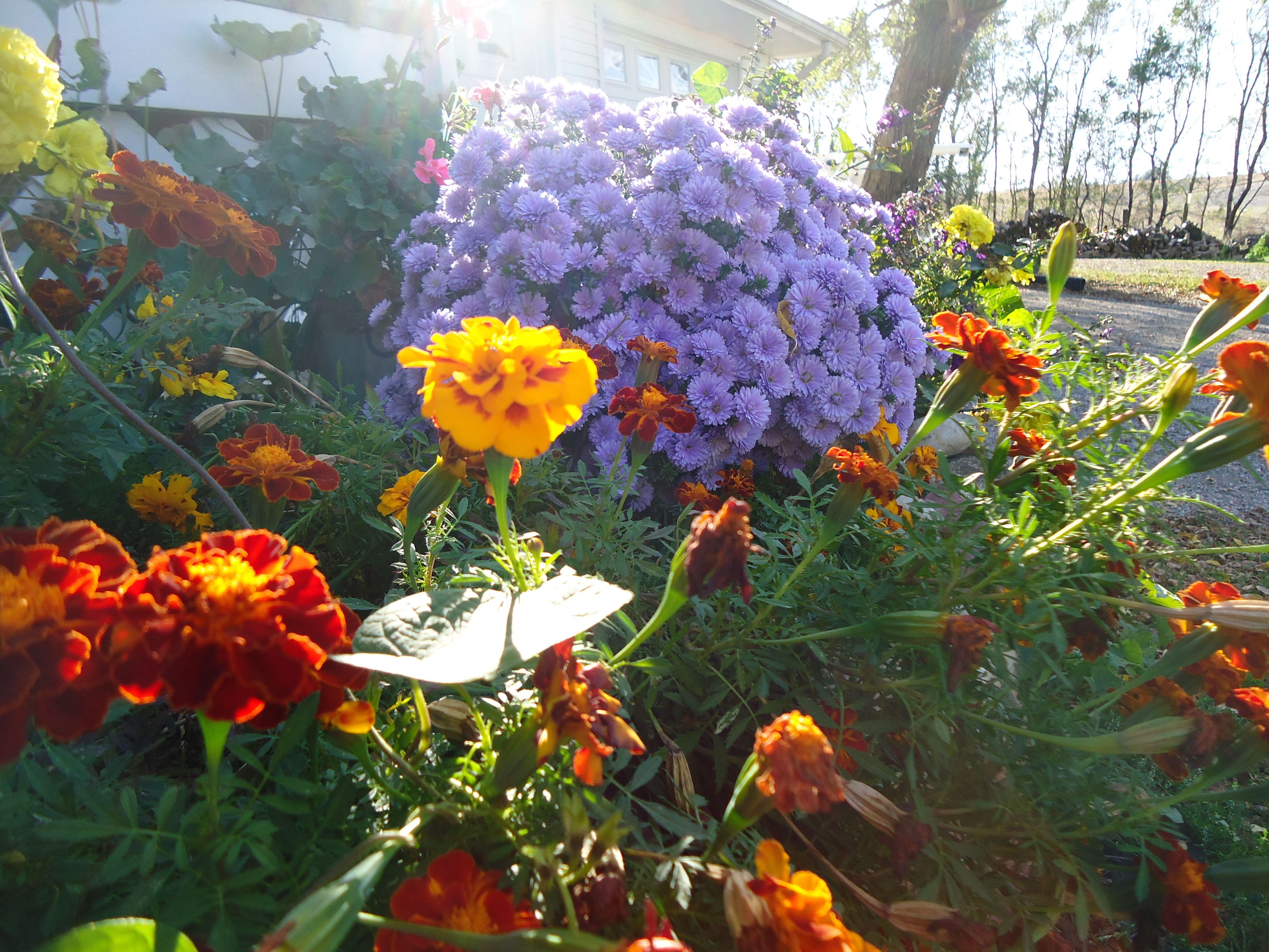 Fall Flowers Gardens Beautiful Pinterest