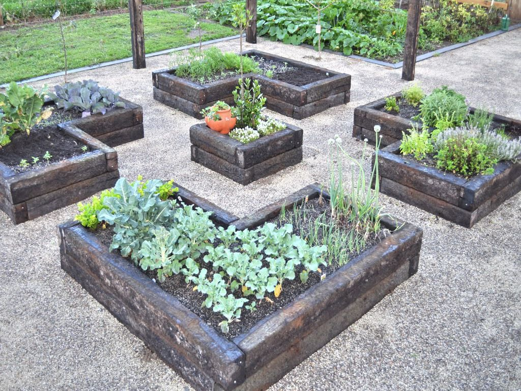 raised beds in the garden pinterest