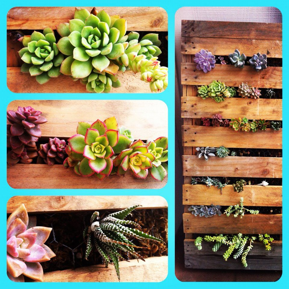 Pin by taylor graves on pallets are awesome pinterest for Pallet succulent garden