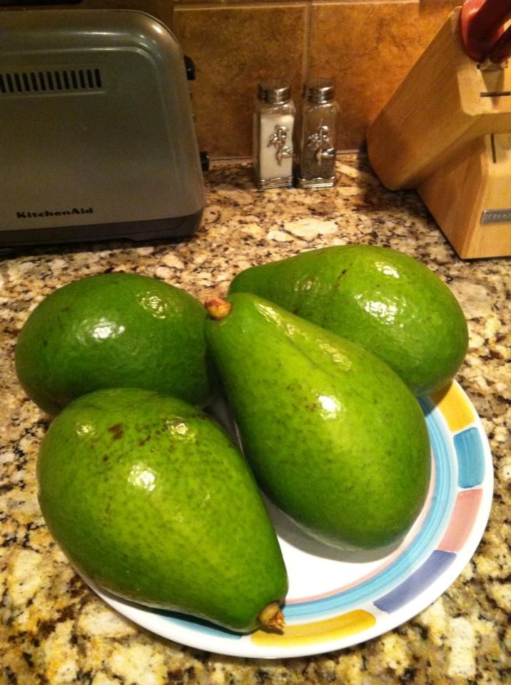 fruits in puerto rico avocado fruit or vegetable