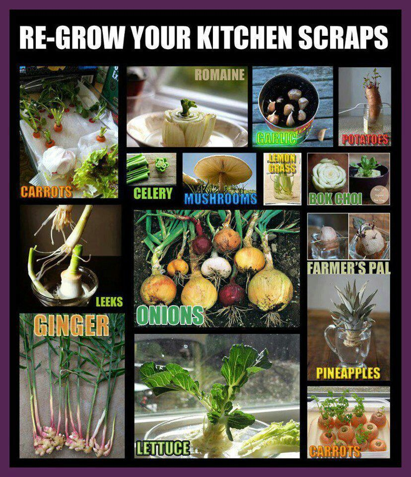 Re-grow Your Kitchen Scraps
