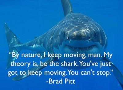 Shark you preise