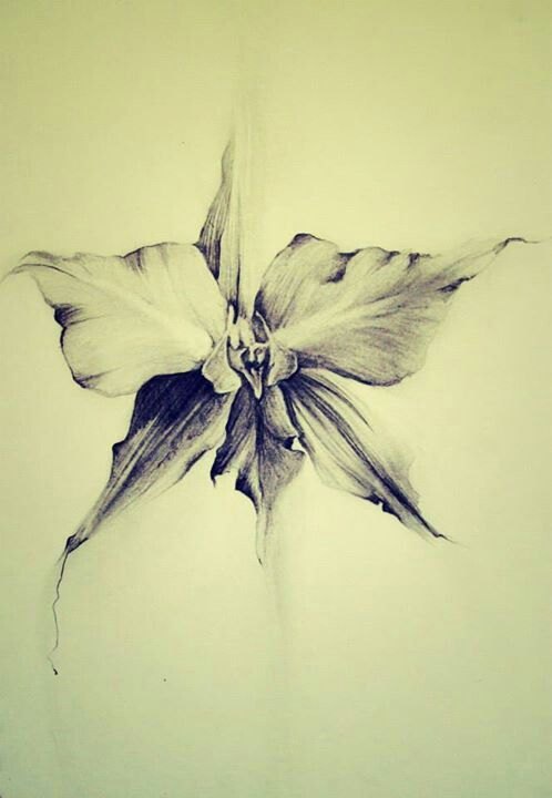 Pics Photos - Pencil Drawings Of Orchids Orchids Is A Perfect Example