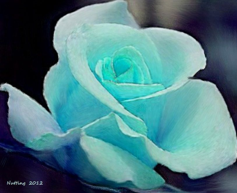 Light Blue Rose | Flowers by Bruce Nutting | Pinterest