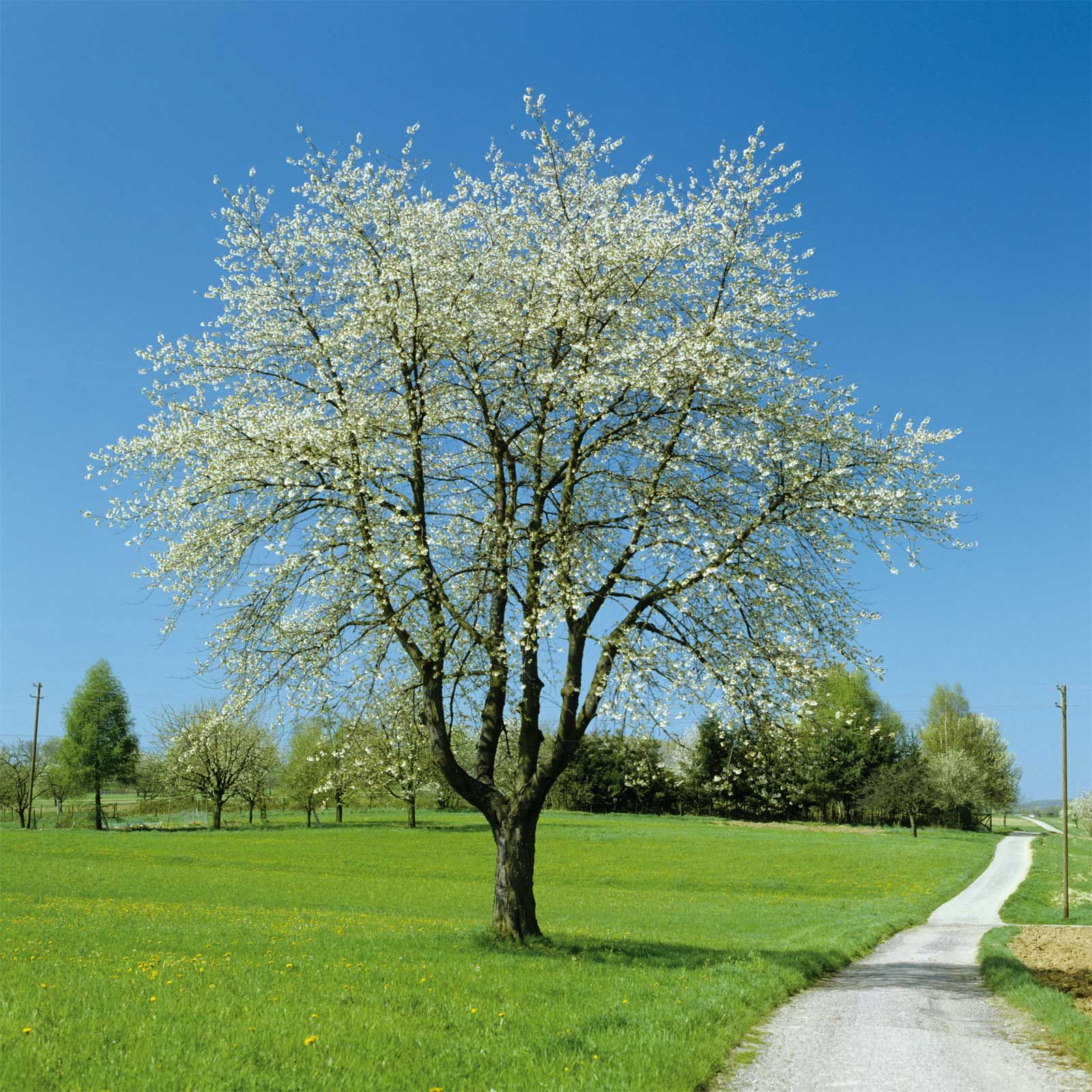 Bomen sur - Afbeelding in ...