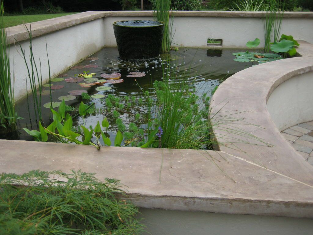 Raised pond  Tropical garden ideas  Pinterest