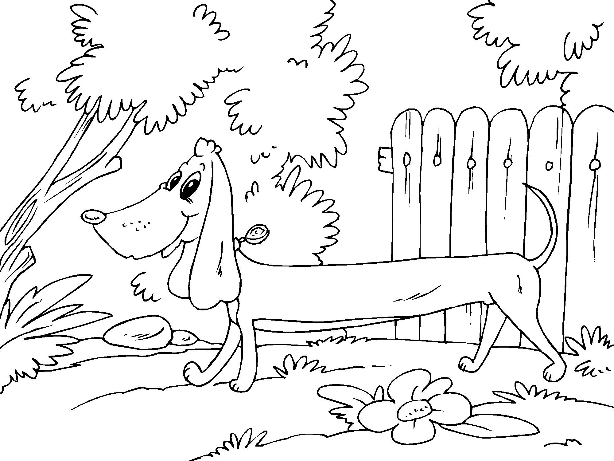 dachshund puppies coloring pages - photo#45