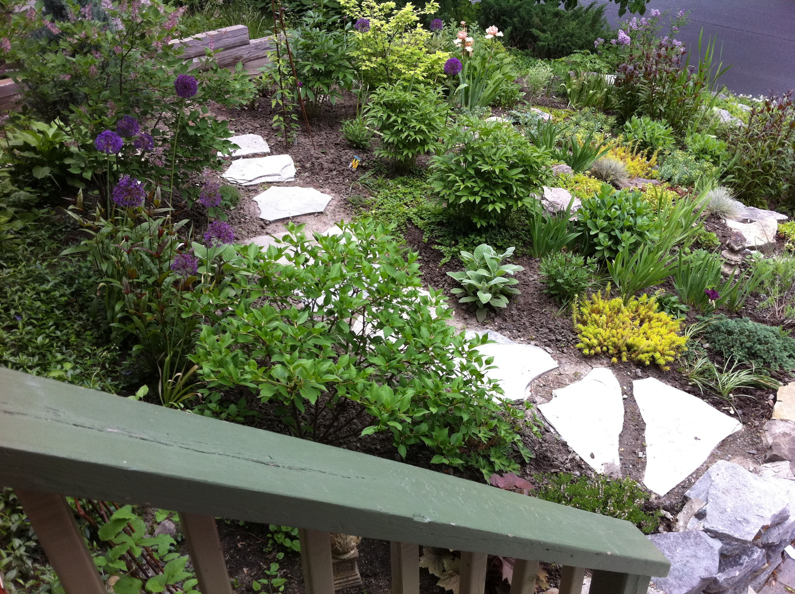 Landscaping Ideas East : Walkway plants landscape ideas east side front of