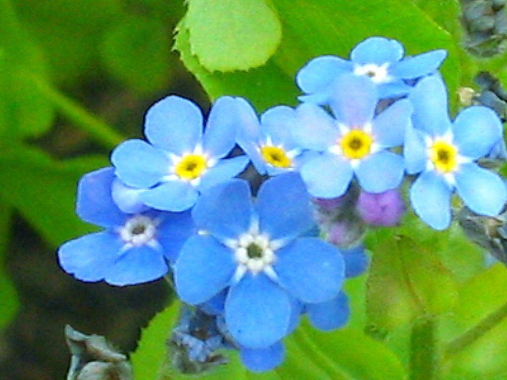 For me not Alaska s state Flower mek