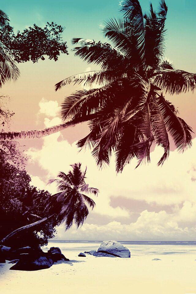 beach and palm tree iphone wallpaper pinterest