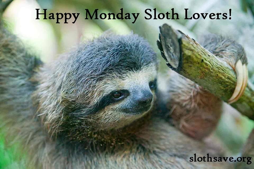 about sloth love on pinterest sloths sloth memes and baby