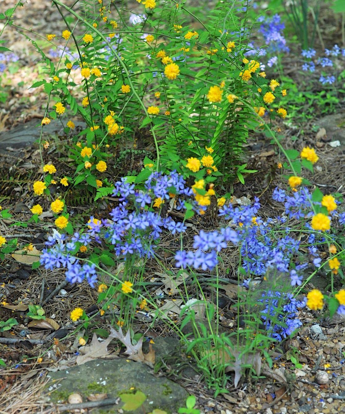 Shady woodland garden ideas photograph woodland garden m for Woodland shade garden designs