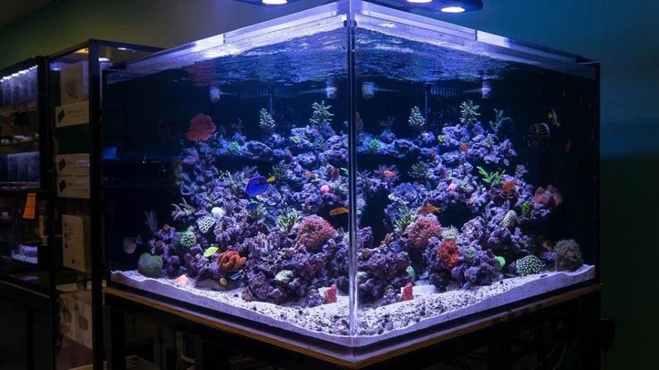 300 gallon salt water fish tank dream rooms pinterest for Dream of fish tank