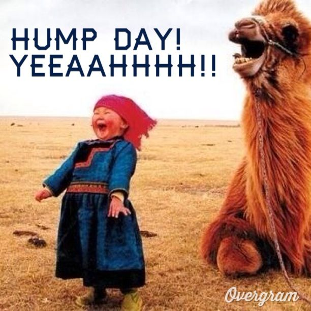 Hump Day Quotes And Jokes. QuotesGram