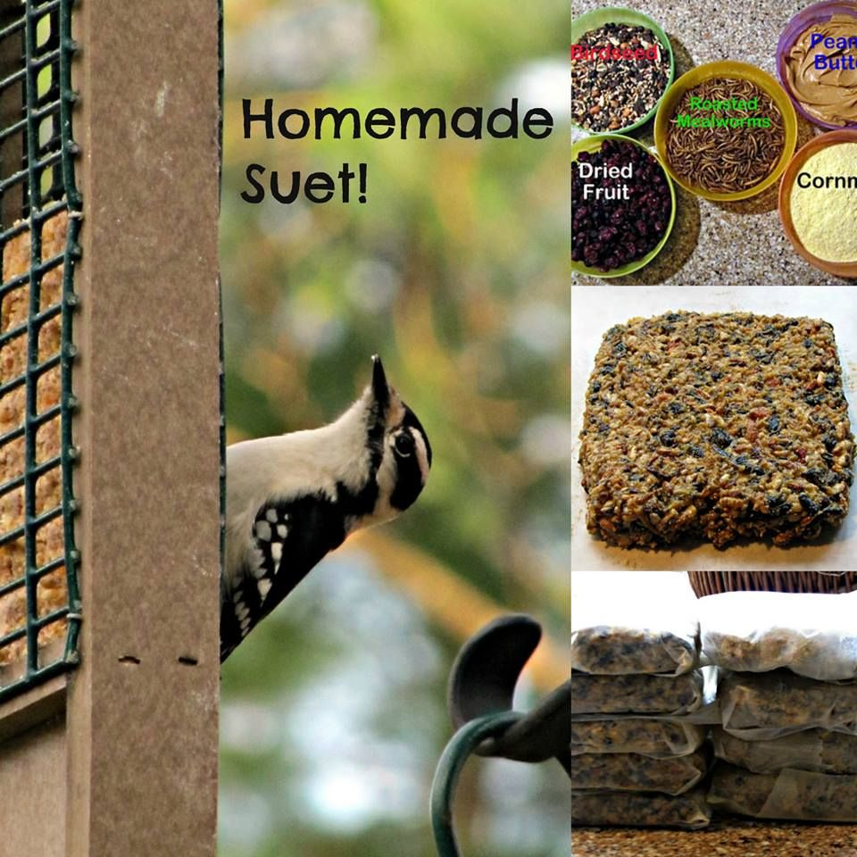 Homemade suet recipe is in comments birding pinterest for How to make suet balls for bird feeders