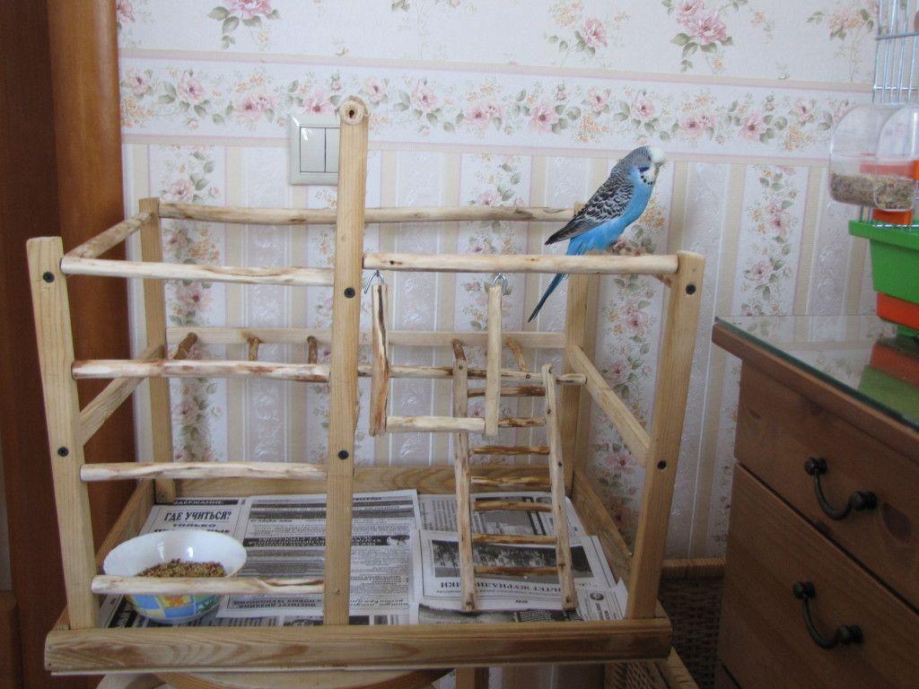 Из чего сделать клетку для попугаев своими