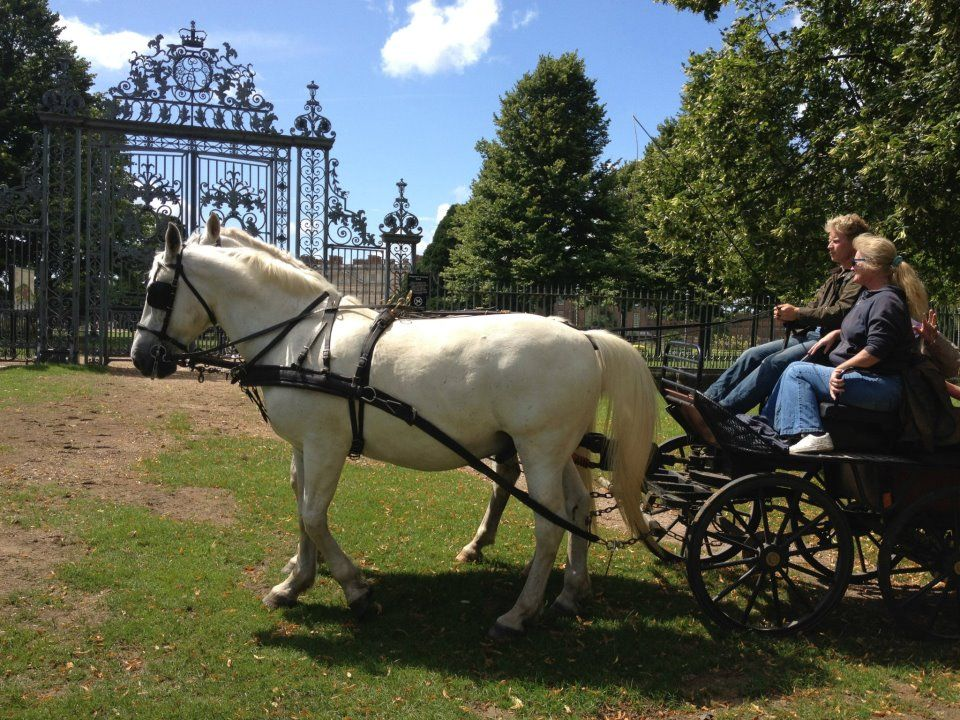 Horse drawn carriage rides for touring estates, family entertainment for festivals, events, national trust, parks, herefordshire, worcestershire, shropshire, gloucestershire, wales, castles, grand houses, powys, horse and carriages, horse drawn carriages