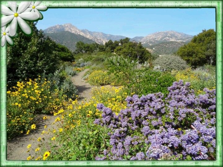 botanical garden santa barbara pinterest